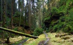 Crique et chemin en parc national Photographie stock