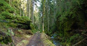 Crique et chemin en parc national Photographie stock libre de droits