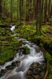 Crique olympique de péninsule, Washington State Image stock