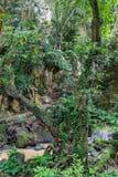 Crique orageuse dans la jungle Phuket, Thaïlande image stock