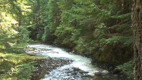 Crique reculée de forêt banque de vidéos