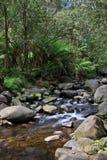 Crique tempérée de forêt humide Photos libres de droits