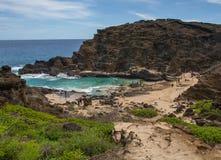 Crique tropicale stupéfiante Oahu Hawaï de plage de Halona images libres de droits