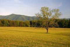 Crique Vista de Cades Images stock