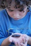 Crisálida del gusano del claxon del tabaco Fotos de archivo libres de regalías