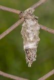 Bagworm fotografía de archivo