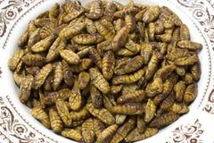 Crisálidas del gusano de seda Foto de archivo libre de regalías