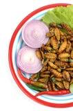 Crisálidas del gusano de seda, Imagen de archivo libre de regalías