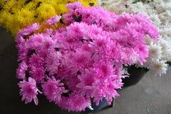 Crisântemo amarelo bonito e rosa Fotos de Stock Royalty Free