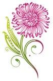 Crisântemo cor-de-rosa Imagem de Stock Royalty Free