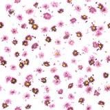 Crisântemo e Daisy Buds Pattern roxos foto de stock