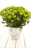 Crisântemo verde em um balde Foto de Stock Royalty Free