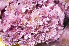 Crisântemos cor-de-rosa em um ramalhete em um mercado da flor Imagem de Stock