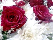 Crisântemos e rosas Imagens de Stock