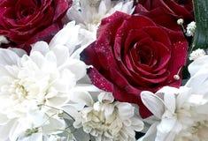 Crisântemos e rosas Fotografia de Stock Royalty Free