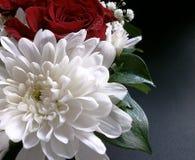 Crisântemos e rosas Fotos de Stock Royalty Free