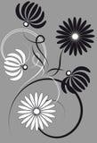 Crisântemos preto e branco Ilustração do Vetor