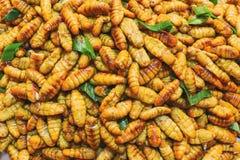 Crisalidi fritte è alimento famoso della via fotografia stock libera da diritti