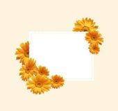 Crisantemi illustrazione vettoriale