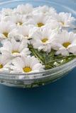 Crisantemi in acqua Immagini Stock Libere da Diritti