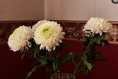 Crisantemi bianchi della forma sferica con il centro verde in un vaso a cristallo Fotografia Stock Libera da Diritti