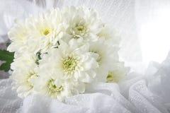 Crisantemi con luce morbida Fotografia Stock