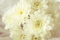 Crisantemi con luce morbida Immagini Stock