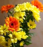 Crisantemi gialli ed arancio Fotografia Stock