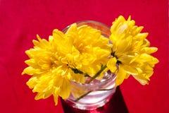 Crisantemi luminosi gialli fotografia stock