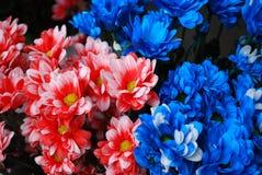 Crisantemi variopinti Fotografie Stock