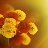 Crisantemi variopinti di autunno Immagine Stock Libera da Diritti