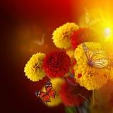 Crisantemi variopinti di autunno Fotografie Stock Libere da Diritti