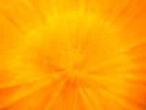 Crisantemo 2 Fotografie Stock Libere da Diritti