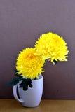 crisantemo Fotografia Stock