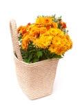 Crisantemo amarillo en florero de la paja Fotografía de archivo