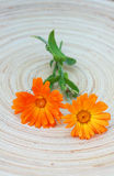 Crisantemo anaranjado imagen de archivo