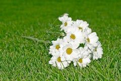 Crisantemo bianco Immagine Stock