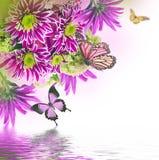 Crisantemo brillante de la primavera fotografía de archivo