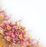 Crisantemo brillante de la primavera, floral Imagenes de archivo