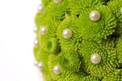 Crisantemo con le perle Fotografie Stock