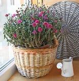 Crisantemo de la lila en una cesta Fotografía de archivo