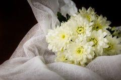 Crisantemo di bianco di natura morta Fotografia Stock Libera da Diritti