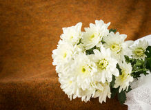 Crisantemo di natura morta Fotografie Stock