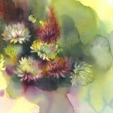 Crisantemo en acuarela verde del fondo Foto de archivo