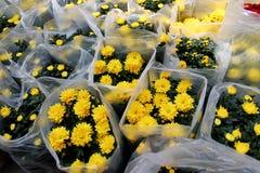 Crisantemo en el empaquetado Fotografía de archivo libre de regalías