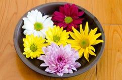 Crisantemo en la placa Fotografía de archivo libre de regalías