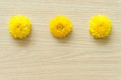 Crisantemo giallo su un fondo di legno, spazio libero fotografia stock