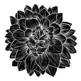 Crisantemo o Dahlia Flower Retro Woodcut Fotos de archivo libres de regalías