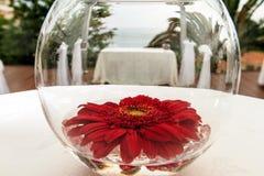 Crisantemo rojo Imagen de archivo libre de regalías