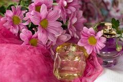 Crisantemo rosado Fotografía de archivo libre de regalías